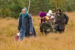 12. Panie zbierające żurawinę. Najczęściej tą ciężką pracę wykonują kobiety, których średnia wieku jest około 70 lat.